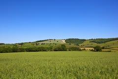 Yorkshire-Woldshaferernte Stockfotografie