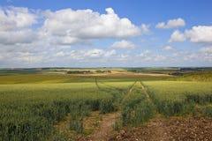 Yorkshire-Woldshaferfelder Lizenzfreies Stockfoto
