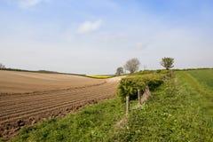 Yorkshire-Woldskartoffelreihen Stockfoto
