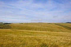 Yorkshire woldskorn Arkivbild