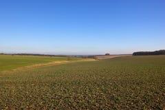 Yorkshire-Woldslandwirtschaft Lizenzfreie Stockfotografie