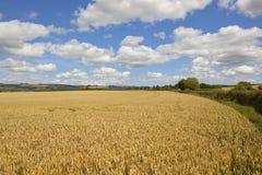 Yorkshire woldsvete Fotografering för Bildbyråer