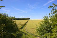 Yorkshire-Woldsweizen Stockbilder