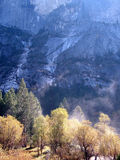 Yosemite. Woods under foot of mountain in yosemite Royalty Free Stock Photography