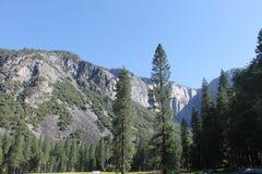 Yosemite | 2013 | Bäume u. Berg Lizenzfreie Stockfotografie