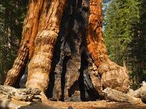 Yosemite: Basis van Grijze Reus royalty-vrije stock fotografie
