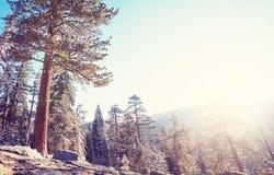 Yosemite Royalty Free Stock Image