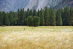 Yosemite daläng Royaltyfria Foton