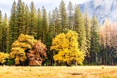 Yosemite dal på den molniga höstmorgonen Royaltyfri Foto