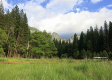 Yosemite doliny obszar trawiasty Obraz Stock