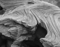 Yosemite Doorstaan Logboek met Zware Krommen Stock Afbeelding