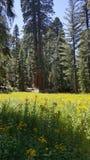 Yosemite dunge Arkivfoton