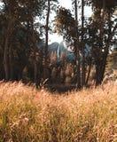Yosemite Falls увиденный от поля золотой травы осени стоковые изображения rf