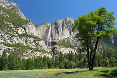 Yosemite Falls Royaltyfri Fotografi