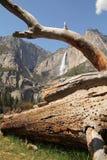Yosemite Falls Arkivfoto