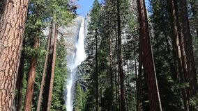 Yosemite Falls fra gli alberi archivi video