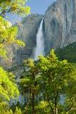 Yosemite Falls på klar morgon Arkivfoton