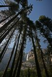 Yosemite Falls par des arbres Photo stock