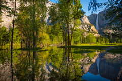 Yosemite Falls reflexion i den Merced floden Royaltyfri Bild