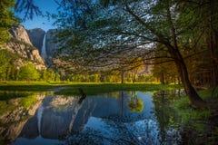 Yosemite Falls reflexion i den Merced floden Arkivbilder