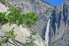 Yosemite Falls In summer On A Clear Day Royalty Free Stock Photography