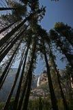 Yosemite Falls a través de árboles Foto de archivo
