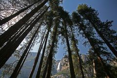 Yosemite Falls through the trees Stock Photo