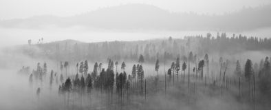 Yosemite Forest in Clouds Royalty Free Stock Photography