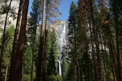 Yosemite forest park national california with waterfall stock image