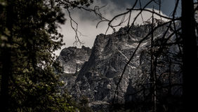 Yosemite Grass Low Angle. Yosemite National Park in the early of 2013 Royalty Free Stock Photography