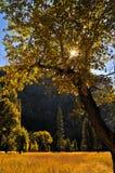 Yosemite im Herbst Stockbild