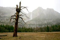 Yosemite im Winter Lizenzfreie Stockbilder
