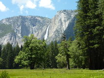 Yosemite Landscape. Waterfall, mountains, trees, and grass at Yosemite Royalty Free Stock Photo