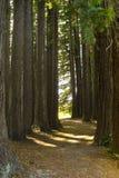 Yosemite liści jesienią Zdjęcia Stock
