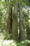 Yosemite liści jesienią Fotografia Stock