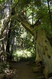 Yosemite liści jesienią Zdjęcie Royalty Free