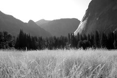 Yosemite meadow Stock Photography