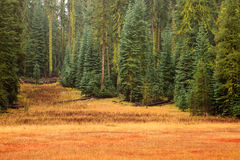 Yosemite Meadow and Forest Royalty Free Stock Image
