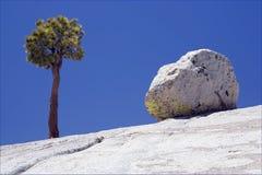 Yosemite National Park. View of Yosemite National Park, California, USA Stock Photos