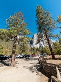 Walking near the tall trees in Yosemite Nationl Park forest Stock Image