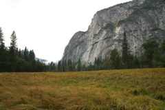 Yosemite National Park, California, USA. Steep mountain cliff, forest and grass meadow in the foreground Stock Photography