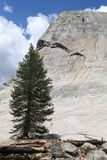 Yosemite National Park : Lembert Dome Royalty Free Stock Photo