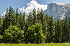 Yosemite National Park. View at the Yosemite National Park Royalty Free Stock Photos
