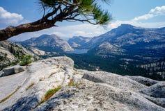 Yosemite nationalpark royaltyfri fotografi