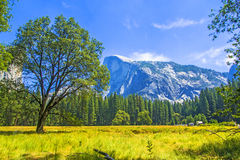 Yosemite nationalpark C A Arkivbilder