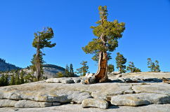 Yosemite nationalpark, Kalifornien Royaltyfria Foton