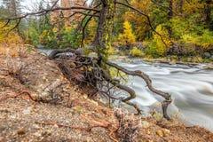Yosemite nationalparkdal och Merced flod på hösten Arkivfoto