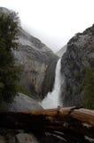 Yosemite nationalparknedgångar med det gamla trädet Arkivbild