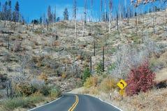 Yosemite-Naturpark nach dem großen Feuer Stockfotografie