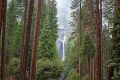 Yosemite nedgång - sikt till och med skogen till vattenfallet Arkivfoto